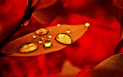 Dew drops on a leaf wallpaper