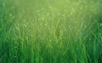 Dew drops on grass wallpaper 1920x1200 jpg