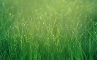 Dew drops on grass wallpaper 1920x1200 jpg