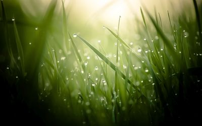 Dew drops on grass [2] wallpaper