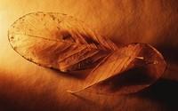 Dry leaves [2] wallpaper 1920x1200 jpg