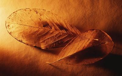 Dry leaves [2] wallpaper