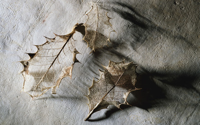 Dry leaves wallpaper