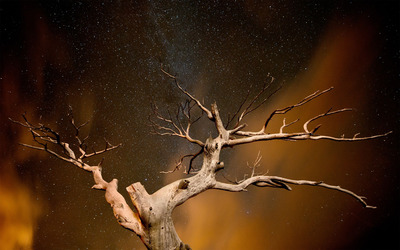 Dry tree agains the starry sky wallpaper