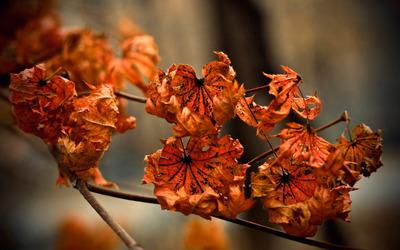 Drying Leaves wallpaper