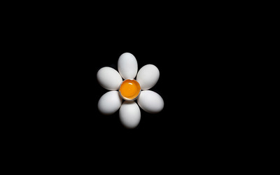 Eggs in the shape of a daisy wallpaper