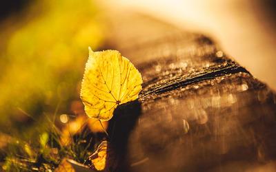 Fallen Leaf [2] wallpaper