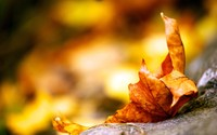 Fallen leaf [3] wallpaper 2560x1600 jpg