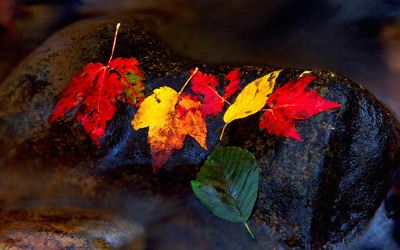 Fallen leaves on the stone wallpaper