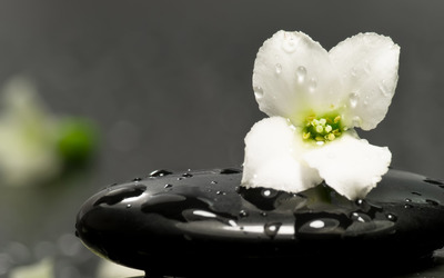 Flower on a spa stone wallpaper