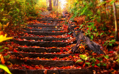 Foliage covered steps wallpaper
