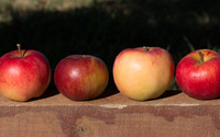 Four apples on a wood beam wallpaper 3840x2160 jpg