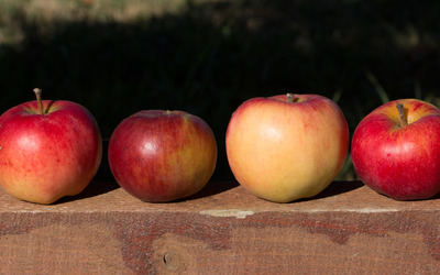 Four apples on a wood beam wallpaper