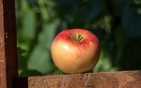 Fresh apple in the soft sunlight wallpaper 3840x2160 jpg
