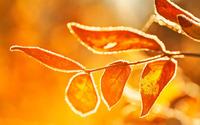 Frosty leaf wallpaper 2560x1600 jpg