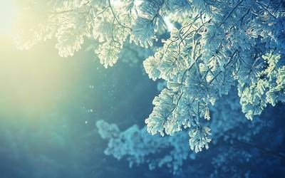 Frosty tree wallpaper