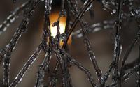 Frozen branch [2] wallpaper 3840x2160 jpg