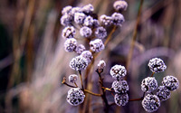 Frozen flower buds wallpaper 2560x1440 jpg