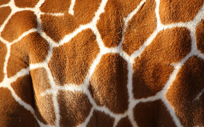 Giraffe skin [2] wallpaper
