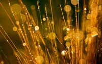 Golden dew drops on the grass wallpaper 2560x1600 jpg