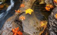 Golden leaves in the river wallpaper 1920x1200 jpg