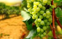 Grapes wallpaper 2560x1600 jpg