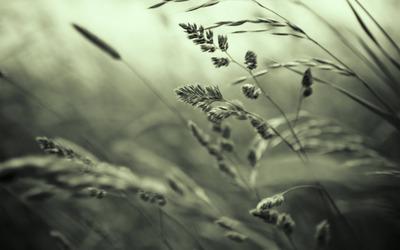 Grass [2] wallpaper