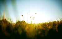 Grass [3] wallpaper 1920x1200 jpg