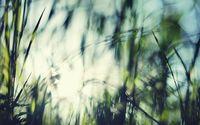 Grass [10] wallpaper 1920x1080 jpg
