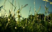 Grass wallpaper 1920x1200 jpg