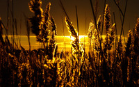 Grass silhouette in the sunset wallpaper 1920x1200 jpg