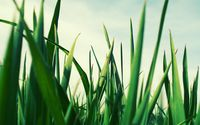 Green grass [2] wallpaper 2560x1600 jpg