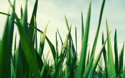 Green grass [2] wallpaper
