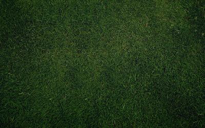 Green grass [4] Wallpaper