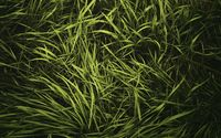 Green grass in the summer wallpaper 1920x1200 jpg