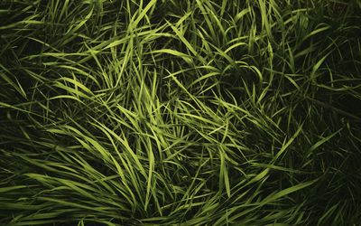 Green grass in the summer wallpaper