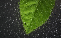 Green leaf behind the window with water drops wallpaper 2560x1600 jpg