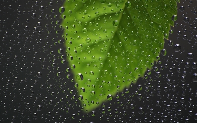 Green leaf behind the window with water drops wallpaper