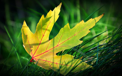 Green leaf in the grass wallpaper