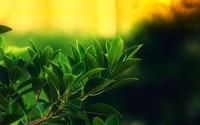 Green leaves wallpaper 1920x1080 jpg