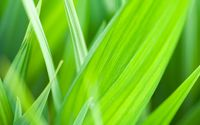 Green leaves close-up wallpaper 1920x1200 jpg