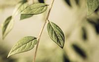 Green leaves on a branch [2] wallpaper 2560x1600 jpg