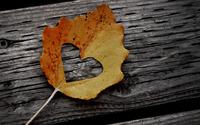 Heart cut-out in a fallen leaf wallpaper 1920x1080 jpg