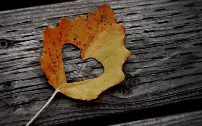 Heart cut-out in a fallen leaf wallpaper