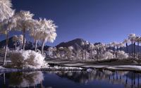 Infrared plam trees wallpaper 2560x1600 jpg