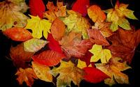 Ladybug on autumn leaves wallpaper 2880x1800 jpg