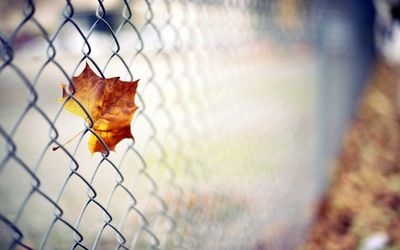 Leaf in a fence Wallpaper
