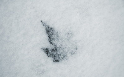 Leaf in snow wallpaper