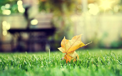 Leaf on grass wallpaper