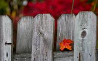 Leaf on the fence wallpaper 1920x1200 jpg